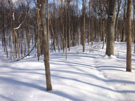 Bendix Woods County Park