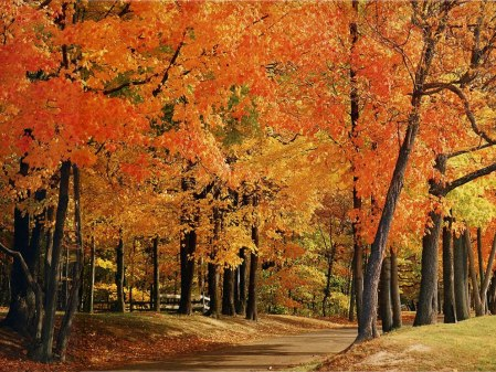 fall-foliage-in-indiana-park-autumn-in-indiana